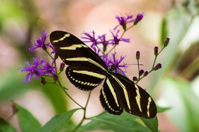 Boca Raton Butterfly Garden