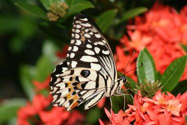 bigstock-Butterfly-Dining-5175571.jpg
