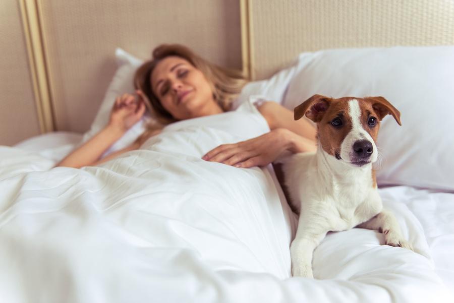 bigstock-Beautiful-Girl-With-Dog-123480974.jpg