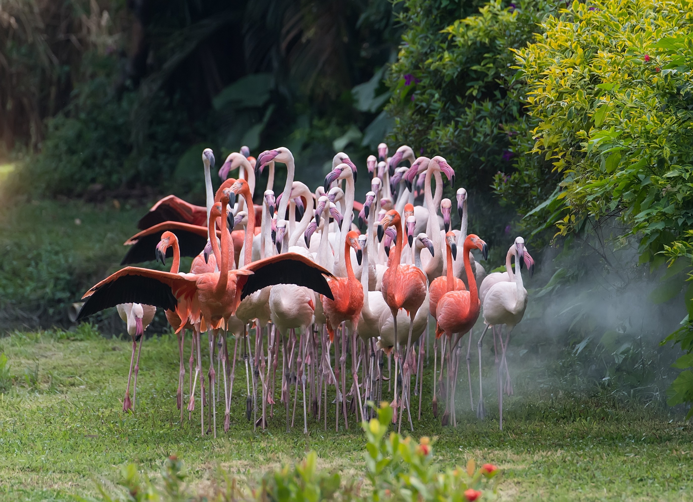 bigstock-Flamingo-birds-standing-in-lak-206190913.jpg