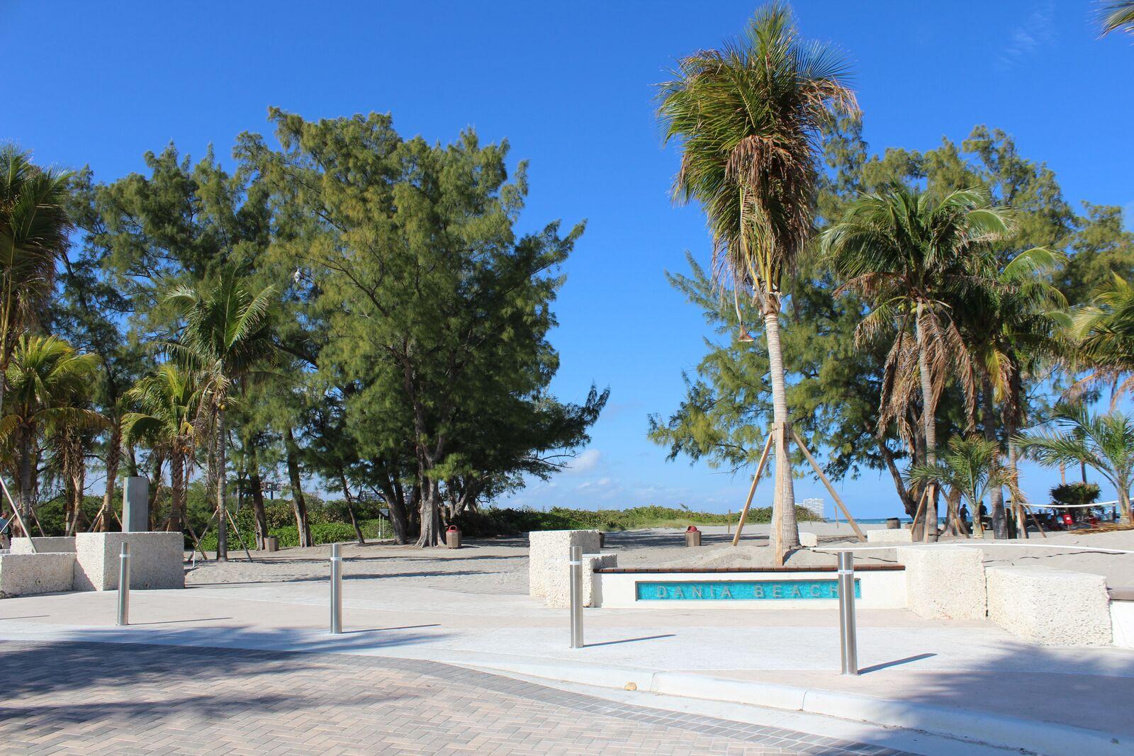 Palm Tree Near Walk Way.jpg