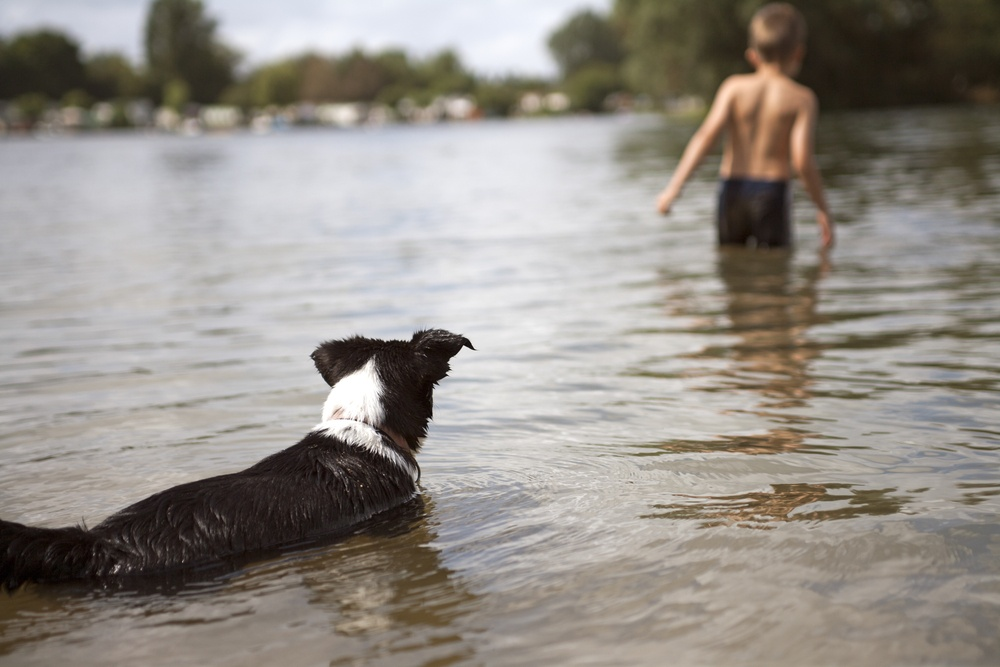 Young boy swimming at the lake while his dog watches and worries..jpeg