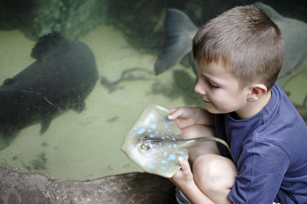 Young boy crouching beside large aquarium holding a toy Sting Ray.jpeg
