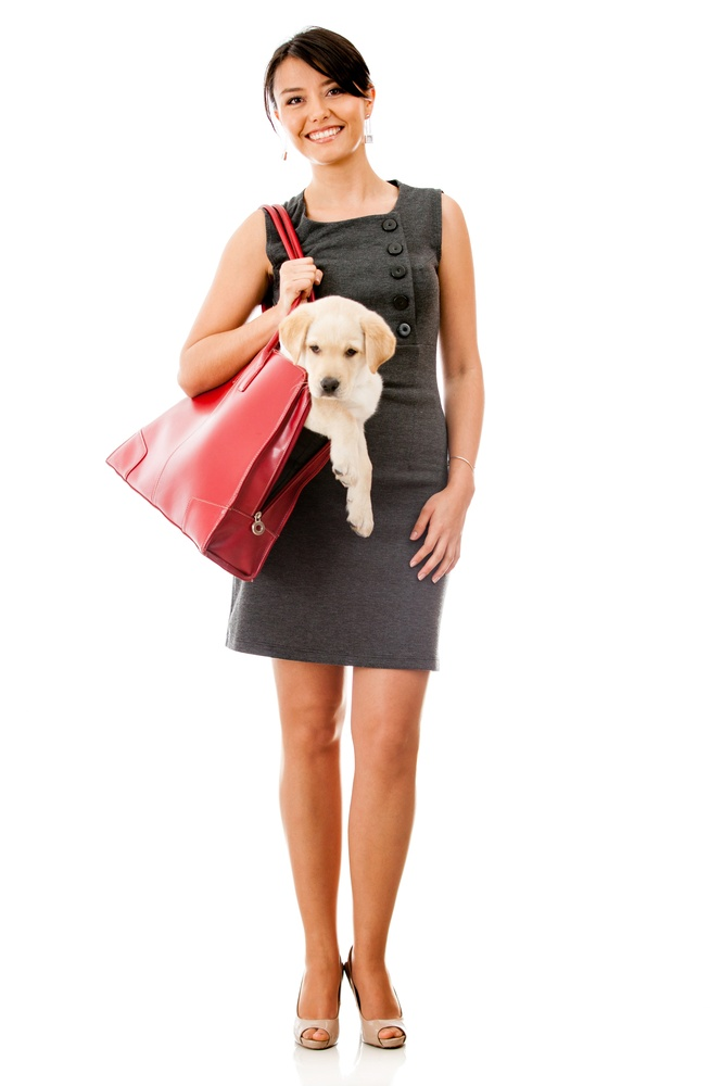 Business woman carrying a dog in her purse - isolated over white.jpeg