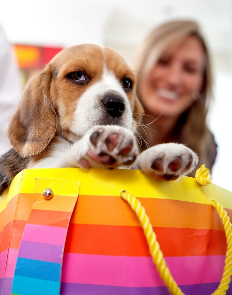 woman with a puppy in a shopping bag.jpeg